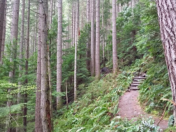 Hiking Mt. Si